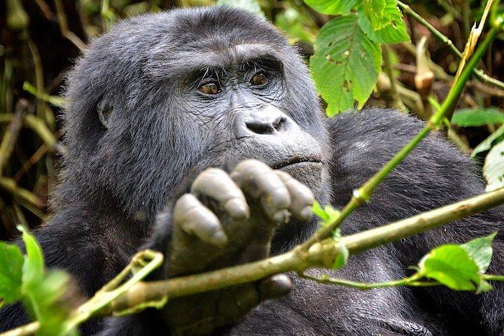 20 Days Discover Uganda