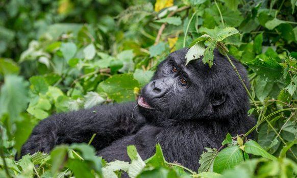 12 Days Uganda Rwanda Primates Wildlife & Cultural safari